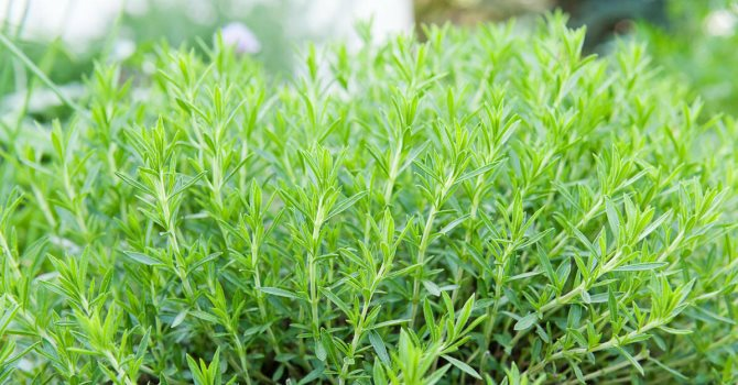 Какие травы полезно добавлять в чай: 32 растения для чая