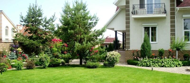 Как сделать газон на даче своими руками: виды и посадка газона поэтапно